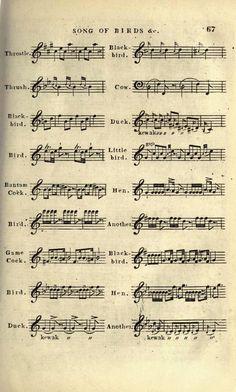 Bird song sheet music 67