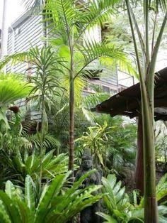 The Ultimate Revelation Of Tropical Landscaping 12 – Kawaii Interior Tropical Garden Design, Tropical Backyard, Tropical Landscaping, Landscaping With Rocks, Tropical Plants, Backyard Landscaping, Tropical Gardens, Backyard Ideas, Garden Ideas