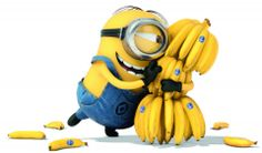 When the minions first came out I thought was stupid. Now I am like omg I have to watch minion. I LOVE MINIONS!