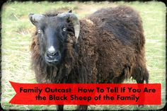 36 Best Black Sheep Of The Family Images In 2019 Sheep Black