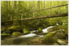 Mossy ruins | Kephart Prong | Virginia Trail Guide