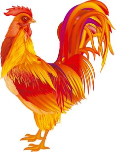 Buy Red-Orange Rooster by dracozlat on GraphicRiver. red-yellow rooster on white background, vector illustration Red Chicken, Chicken Art, Chicken Quilt, Rooster Painting, Rooster Art, Cartoon Rooster, Rooster Vector, Chicken Pictures, Chicken Painting