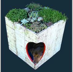 Casas para perro!!!
