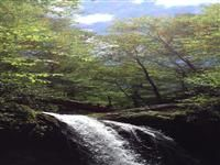 Grotto Falls hike in Gatlinburg