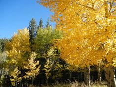 Fall in Southern Colorado, my favorite time of the year, so beautiful. Taken along The Highway of Legends near Trinidad Colorado