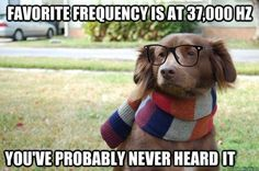 hipster dog hears better than you