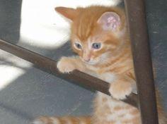 Baby tigger