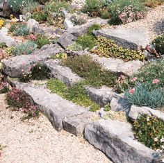 garden steps with gravel and herbs