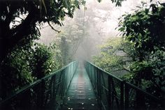 Cloud Forest, Costa Rica