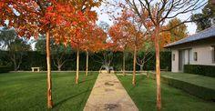 Hedge Garden, Montecito, CA  0541_hedgegarden3 by Rios Clementi Hale Studios
