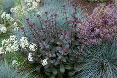 Sedum, fescue and alliums for stylish, low maintenance colour.