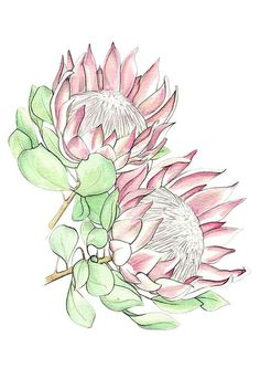 King Protea greeting card illustration by VctoriaVctoria on Etsy - Modern Flor Protea, Protea Art, Protea Flower, Watercolor Print, Watercolor Flowers, Watercolor Paintings, Watercolours, King Protea, Australian Native Flowers