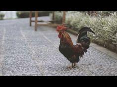 SHAUN & BELINDA BTS VIDEO