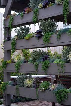 DIY vertical succulent wall
