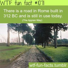 59 Best fun facts images in 2019