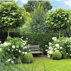 Such a pretty picture.. I love how the weathered timber bench is softened by great mounds of white Hydrangeas, buxus spheres and Catalpa (Indian bean trees) vanraaijen.nl #hydrangea #gardenbench#buxus #boxwood #lindentrees#garden #gardendesign #gardensofinstagram
