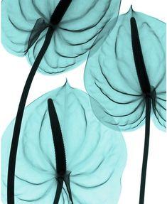 Imágenes: Radiografías de flores - Antidepresivo