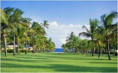 Nisbet Plantation Beach Club's famous Avenue of Palms, which connects the historic Great House, c. 1778, to the white sand beach. #Nevis #Caribbean nisbetplantation.com