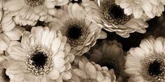 Inspirational Photography Portfolios