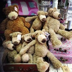 teddys galore