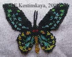 Butterfly Ornithoptera Euphorion at Sova-Enterprises.com