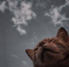 Cute Baby Cats, Cute Cats And Dogs, Kittens Cutest, Cute Babies, Cute Kawaii Animals, Cute Little Animals, Cute Cat Memes, Funny Cats, Rare Cats