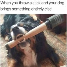 60 Funny Memes - November 2017 – Funnyfoto - Page 11 Crazy Funny Memes, Really Funny Memes, Stupid Funny Memes, Funny Laugh, Funny Relatable Memes, Hilarious, Funny Humor, Funny Animal Jokes, Animal Memes