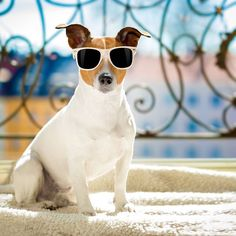 At R567pp sharing we know our #weekend #accommodation #prices are #reallylow, but we can #assure you there is #nothing #shady about our #lastminute #specials. See our website for #more info.  #coolshades #sunnies #sunglasses #lookinggood #snazzy #george #georgieporgie #lekkerplaces #atguvon #summer #soakupthesun #dogslife #website #dontmissout #booknow #weekendplans #breakaway #goodboy Sunnies Sunglasses, Cat Eye Sunglasses, Passion For Life, Real Dog, Weekend Plans, Real Friends, Hotel Spa, The Help, This Is Us