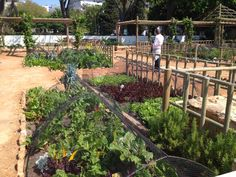 Urban Landscape Solutions - a Cape Town based company offering premier landscaping services. Large commercial and domestic landscaping projects. Herb Garden, Vegetable Garden, Landscape Solutions, New River, Garden Show, Landscaping Company, Medicinal Herbs, Aesthetic Design, Urban Landscape