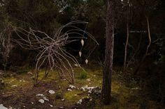A Year in a French Forest: Sculpture No 8.Forest Sculptor Spencer Byles.Photo...