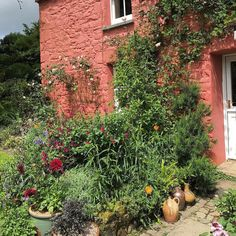 Dyffryn Fernant gardens are in the middle of nowhere down a narrow lane to a hidden valley. The interesting and slightly wild and eclectic gardens surround a crushed strawberry coloured cottage. Not what I expected.