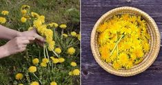 Who hasn't seen those pesky yellow weeds pop up in the garden from time to time? Yet try as you might – from picking them to poisoning them – nothing keeps them at bay for too long. Perhaps it's time you embraced the tenaciousdandelionand all the benefits it can bring?