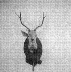One Eared Stag