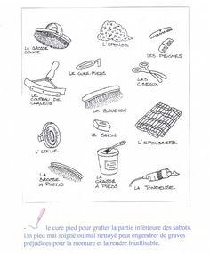 Le matériel de pansage élémentaire ( galop 1)
