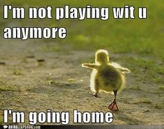 funny animal images pictures