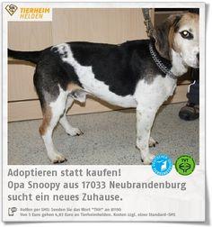 Snoopy musste wegen der Trennung seiner Besitzer ins Tierheim Neubrandenburg.   http://www.tierheimhelden.de/hund/tierheim-neubrandenburg/beagle/opa_snoopy/12353-0/  Trotz seines Alters ist Snoopy sehr agil und munter. Er kann nicht alleine bleiben, ist aber stubenrein, kinderlieb und laut Vorbesitzer verträglich mit Katzen.