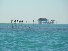 Stiltsville is a group of wood stilt houses located one mile south of Cape Florida on the edge of Biscayne Bay in Miami-Dade County. The structures stand on wood or reinforced concrete pilings, generally ten feet above the shallow water which varies from one to three feet deep at low tide.