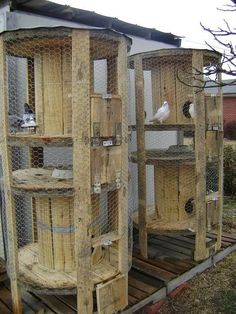 This has to be the cutest chicken coops, EVER! Upcycle wooden spools into backyard chicken cages! Wooden Cable Spools, Wood Spool, Building A Chicken Coop, Diy Chicken Coop, Chicken Wire, Simple Chicken Coop, Chicken Coop Pallets, Chicken Pen, Homestead Survival