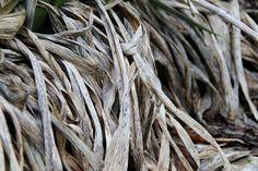 2016-05-06: dry grass
