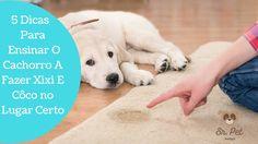Aprenda 5 dicas para seu cachorro fazer côco e xixi no lugar certo de forma simples e direta sem brigar com ele!