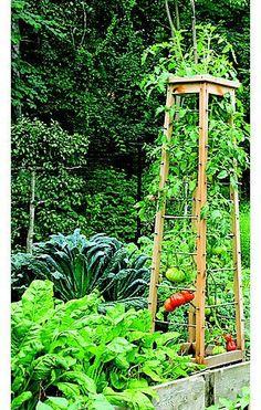 nice tomato trellis idea for next year's vegetable garden. DIY tomato pruning and trellis ideas #growingtomatoestrellis #vegetablegardeningtrellis