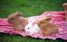 Rabbit by subarunio on Flickr.