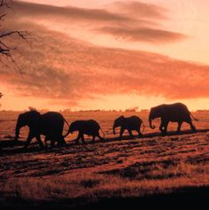 World's Great Animal Migrations - Articles | Travel + Leisure