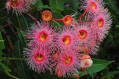 Australian Wildflowers, Australian Native Flowers, Australian Plants, Unusual Flowers, Wild Flowers, Beautiful Flowers, Australian Native Garden, Rare Orchids, Sensory Garden