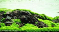 2011 AGA Aquascaping Contest - Entry #127
