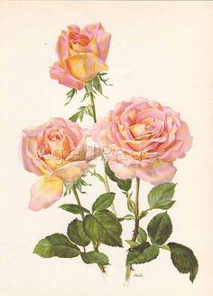 Vintage Floral Botanical Print,  Art Illustration, Rose Series Wall Decor, Confidence
