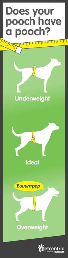 We're weighing in with this must-pin item from Petcentric.com on how to keep your BFF healthy. Click through to this helpful guide on how to manage a healthy weight for your furry friend and what to do if your dog is overweight.
