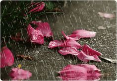 """""""Like a welcome summer rain, humor may suddenly cleanse and cool the earth, the air and you.""""      -   Langston Hughes -"""