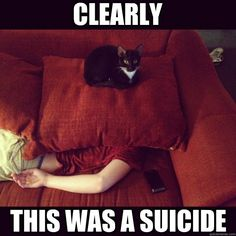 clearly this was a suicide - jealous cat