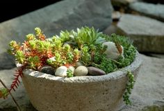 Succulents ~  love the rock planter and rocks :)